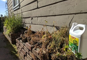 Compare-N-Save Weed Killer Review