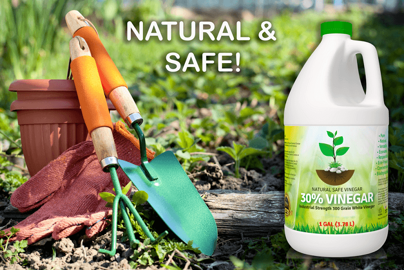 Eco Clean Weed Killer Review