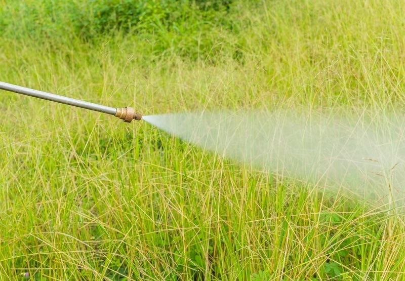 Everything You Need To Know About Weed Killers