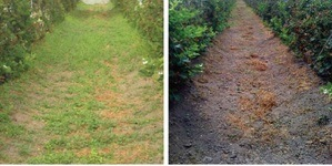 Weed killer effects.
