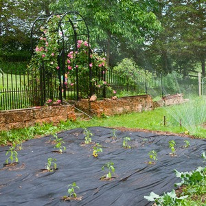 Landscape Fabric Weed Prevention
