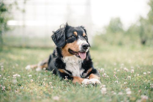 pet friendly weed killer reviews