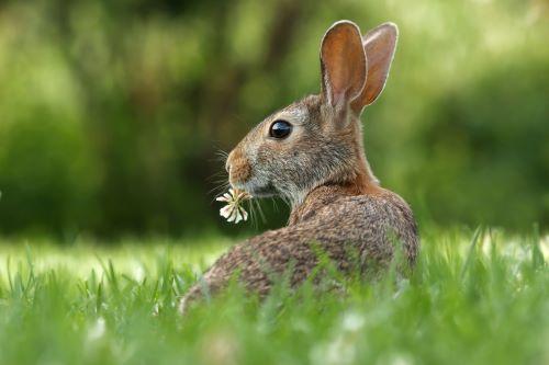 rabbit repellent reviews