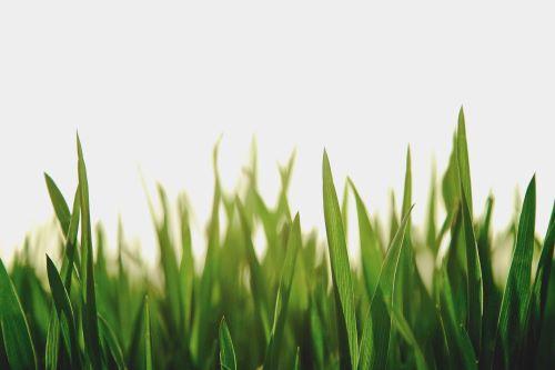 weed killer for bermuda grass reviews