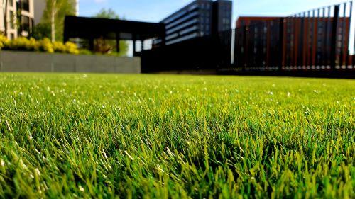 lawn fertilizer reviews
