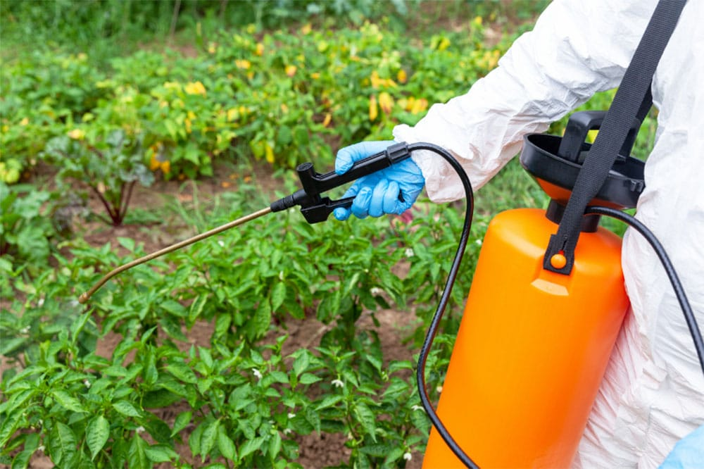 Can I Use Weed Killer In My Vegetable Garden