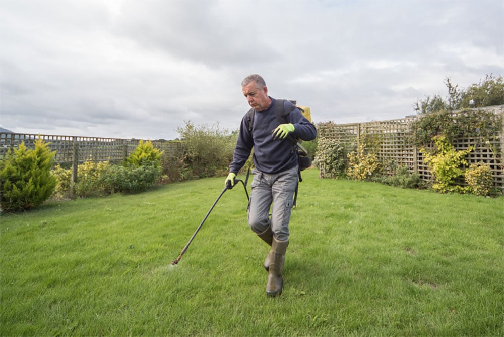 Can You Spray Weed Killer On Wet Grass (Spraying Weeds Before & After Rain)