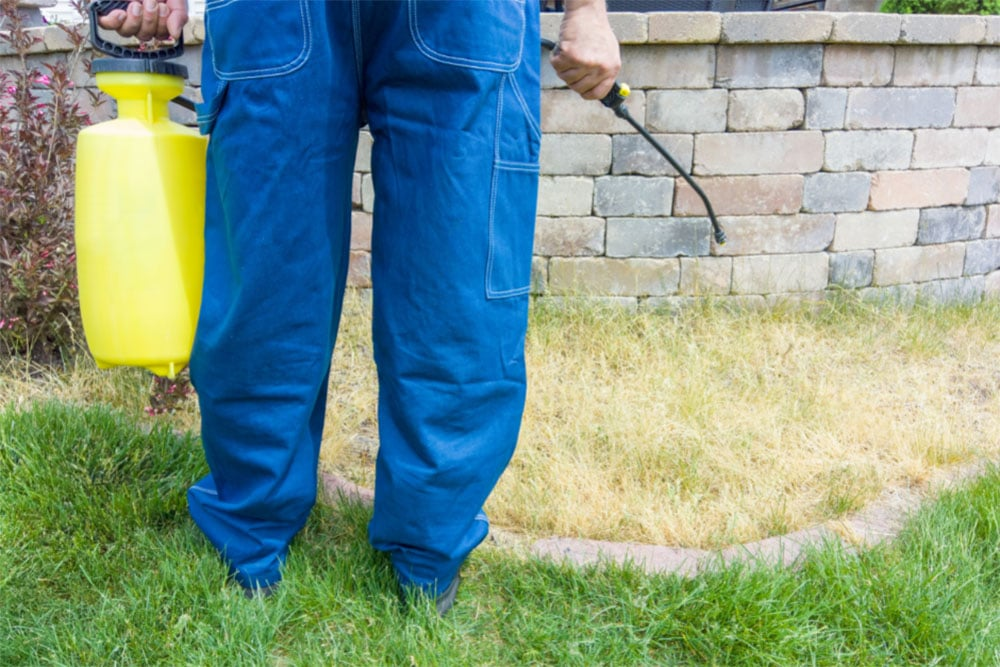 Does Weed Killer Expire (Pesticide and Herbicide Shelf Life)