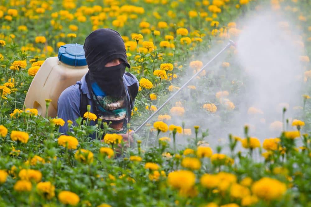 Weed Killer Kill Flowers